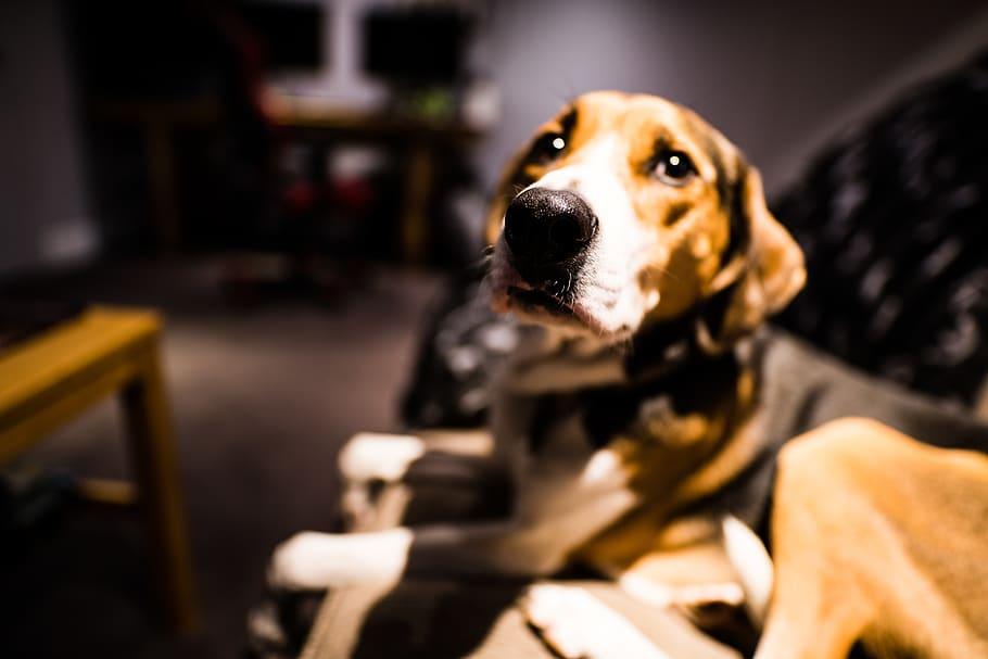 Hasil Penelitian Terbaru, Anjing Bisa Cium Bau COVID-19