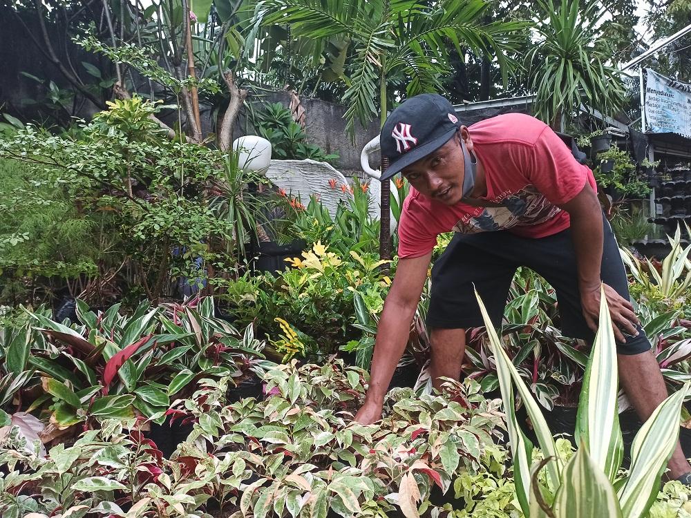 Yatiman, spesialis tanaman hias. Foto: Andi Ristanto/GenPI.co