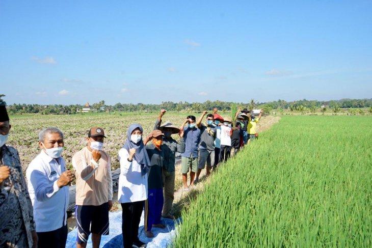 Bupati Banyuwangi Ipuk Fiestiandani Azwar Anas (tengah) foro bersama petani. (ANTARA/HO-Humas Pemkab Banyuwangi)