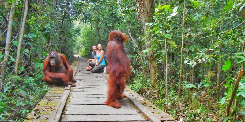 Taman Nasional Tanjung Puting dengan habitat Orang Utan. (Foto: Two Fish Traveling)