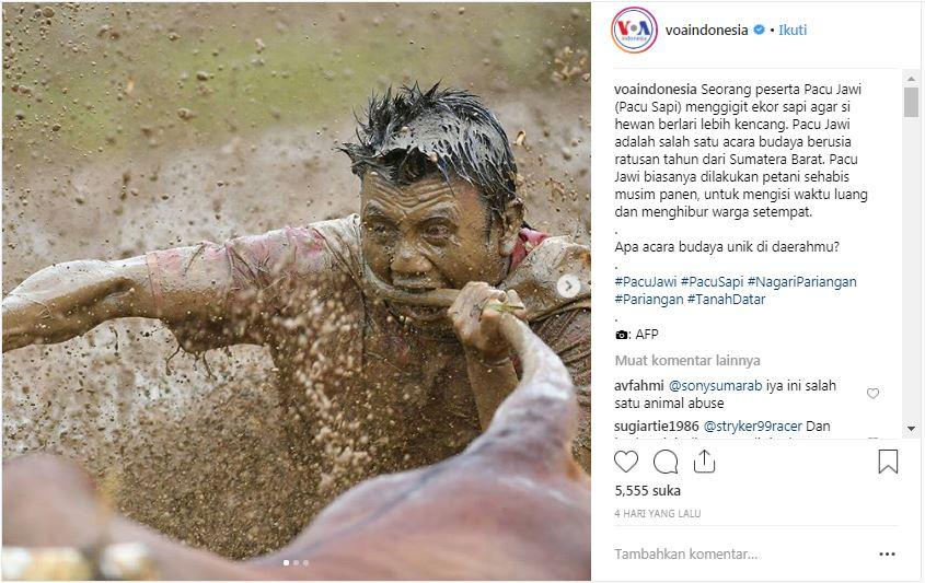 Foto Pacu Jawi yang diunggah @voaindonesia di akun instagram ini mendapat beragam tanggapan. Sebagian menilai itu adalah praktek animal abuse.