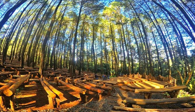 Hutan Pinus yang ada di Bantul, Yogyakarta.