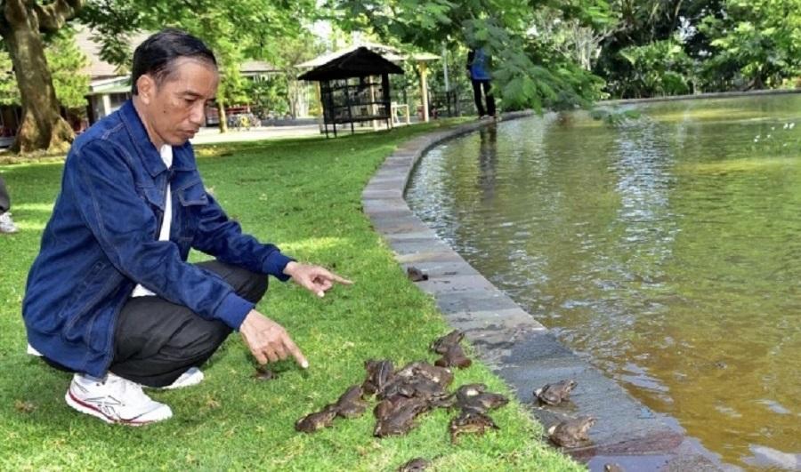 Jokowi dan kodok peliharaannya di Istana Bogor.