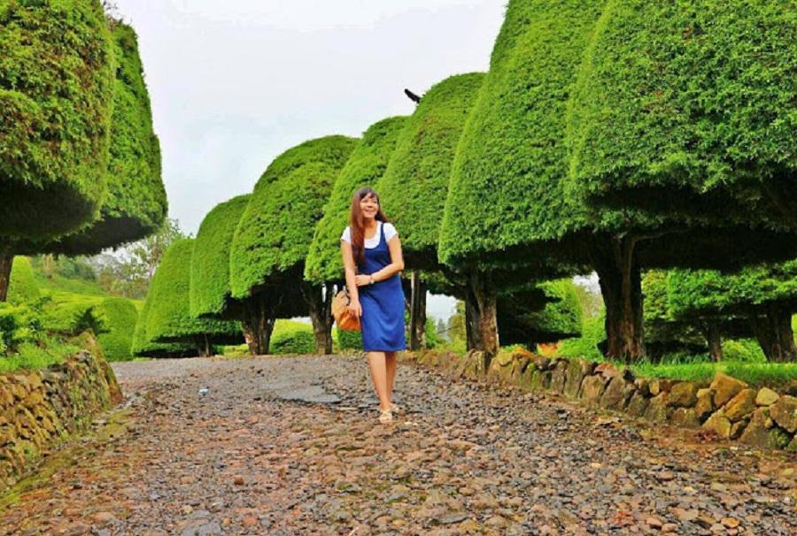 Deretan cemara kerdil menjadi latar yang menarik untuk berfoto. (Foto: berwisatadulu.blogspot.com)