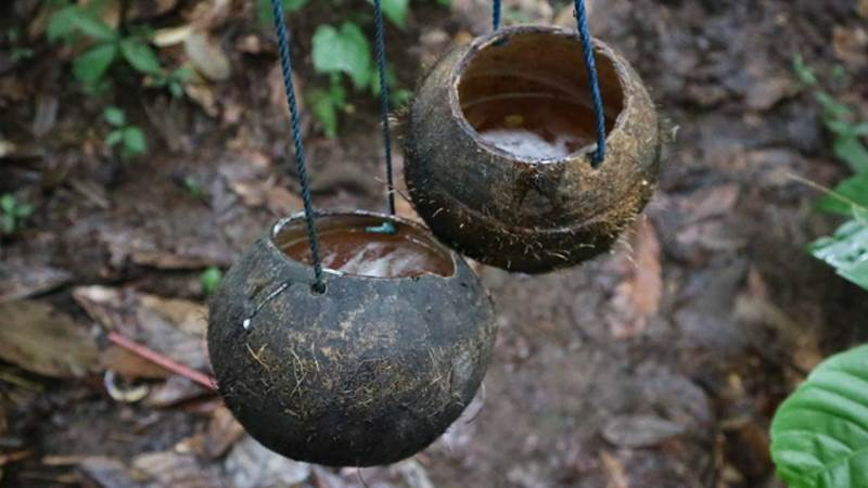 Suguhan Spesial, Swansrai Minuman Khas Papua