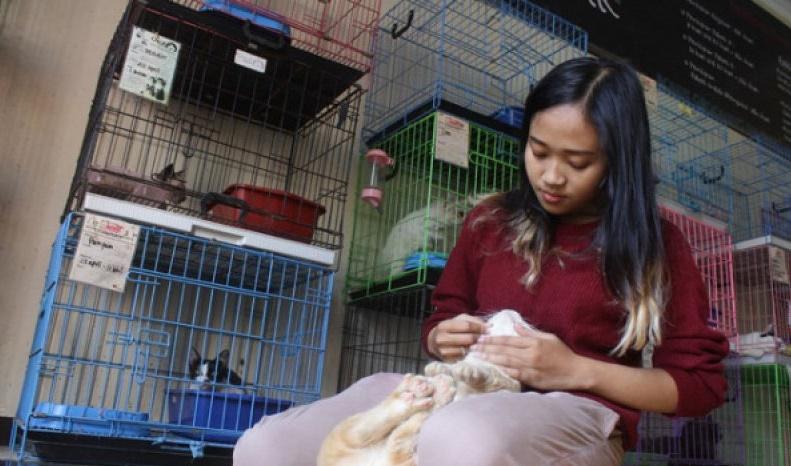 Ilustrasi. Salah satu tempat yang menerima jasa penitipan kucing (foto: Antara)