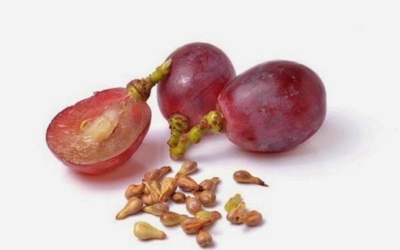 Biji anggur berguna untuk kesehatan (Foto : Istimewa)