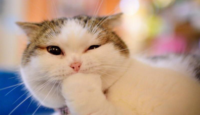Yuk, kenali bahasa kucing kamu (Foto : Istimewa)